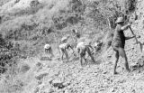 Philippines, men clearing rocks at Cordillera Central Mountains in Banaue