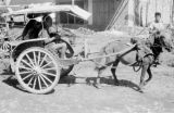 Indonesia, man driving horse-drawn carriage on Sumbawa Island