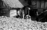 Indonesia, drying coconuts outside home on Sumbawa Island