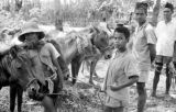 Indonesia, village men with horses on Sumbawa Island