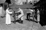 Indonesia, Bishop Willem van Bekkum helping clergyman mount pony at Ruteng mission
