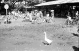 Indonesia, view of market on Sumbawa Island