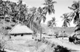 Indonesia, thatched roofed houses and palm trees on shore
