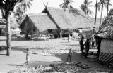 Indonesia, coconuts drying near stilt homes on shore of Sumbawa Island