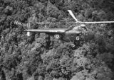Malaysia, British Royal Navy helicopter flying over jungle forest