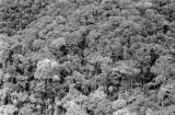 Malaysia, aerial view of dense jungle
