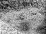 Malaysia, crashed British Royal Navy helicopter in jungle