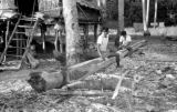 Indonesia, men cutting log next to village stilt home