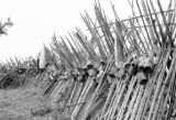 Vietnam, bamboo stave barricade fortifying town during First Indochina War