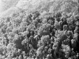 Malaysia, aerial view of treetops in jungle