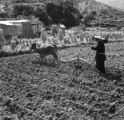 Hong Kong, woman plowing field with ox near house