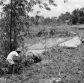 Indonesia, man working at rice paddy in forest