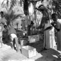 Iraq, men weighing dates before shipping