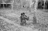 Singapore, boys near rubber trees at plantation
