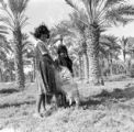 Iraq, girls with sheep in date palm orchard
