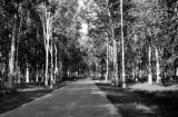 Malaysia, road between rubber trees in plantation