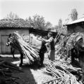 Turkey, man tying bundles of wood to donkey