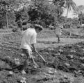 Indonesia, men cultivating soil with hoe on farm field
