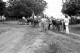 Vietnam, man leading oxen-drawn cart on dirt road