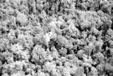 Malaysia, view of dense jungle forest from plane