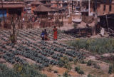 Nepal, vegetable garden among the dwellings