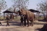 Nepal, elephants and trainers