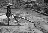 Taiwan, man plowing in a field