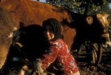 Akkooi (Turkey), woman milking cow