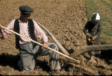 Cinarcik (Turkey), planting corn