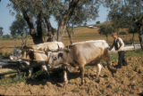 Yalova (Turkey), plowing the fields