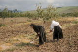Yalova (Turkey), women hoeing the fields