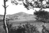 South Korea, view of farm fields and pine trees in South Cholla province