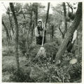 Japan, woman raking branches in forest