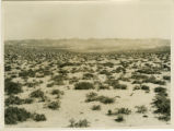 Inner Mongolia (China), sparse vegetation in the desert near Helan Shan and the Great Wall