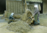 Japan, women stripping off grains of rice