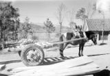 Yunnan (China), horse-drawn cart for transporting building materials to an American air base