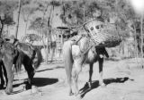 China, pack horses transporting goods