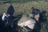 Esfahan province (Iran), man and women harvesting plants