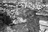 Shanghai (China), destruction in the vicinity of Shanghai during the Nationalist retreat at the...