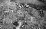 China, bodies of children strewn about in a field