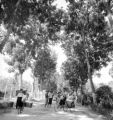 Phet Buri (Thailand), people on tree-lined road