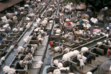 Bombay, Dhobi Ghats (laundries)