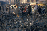 London, Trafalgar Square with pigeons and tourists