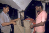 Kelang, workers bagging roasted palm kernels from automated hopper