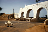 Kano, cattle and goats near old Kano city entrance