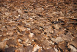 Kano, sun-drying goat hides used to produce leather