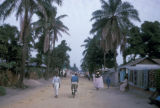 Kinshasa, street scene on palm-lined road