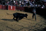 Bogota, bullfighter in ring with charging bull