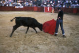 Bogota, amateur bullfighter in ring with bull