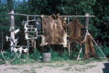 Fairbanks, pelts hanging in Athapaskan Indian village